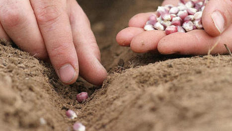 The $1.5 Million Project To Promote Organic Seed In The Face Of Remorseless Uniformity | Why Nature Matters | Scoop.it