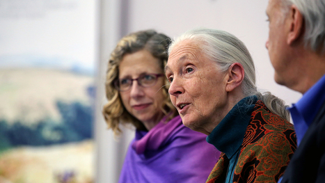Jane Goodall. Diventare vegetariani è una scelta meravigliosa - LifeGate | Rimedi Naturali | Scoop.it