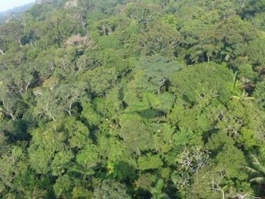 Scientists compile list of all known Amazon tree species, say it could take three centuries to find the rest | Rainforest EXPLORER:  News & Notes | Scoop.it