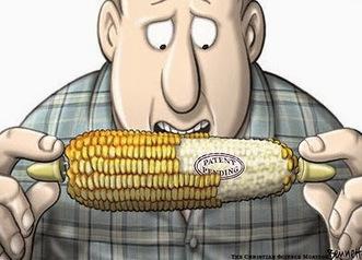 Comunicación Ambiental: Alerta: ¿Ley de Semillas por decreto? | Nuevos modelos alimentarios y agropecuarios | Scoop.it