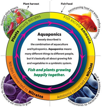 Basic Primer on Aquaponics | Aquaponics Education | Scoop.it