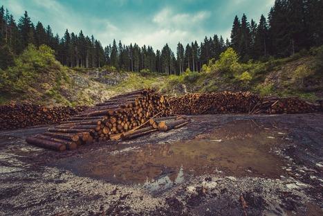 Deforestación. ¿Cuántos árboles son talados cada año en todo el mundo? | Actualidad forestal cerca de ti | Scoop.it