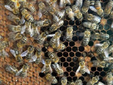 UK govt enlists public in fight to save dwindling bees | Sustain Our Earth | Scoop.it