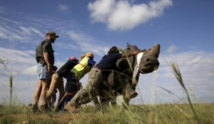 Everything you need to know about Cites - South Africa | IOL News | Wildlife News | Scoop.it