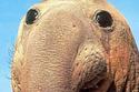 The 25 Happiest Animals In The World | Sitä sun tätä, this and that | Scoop.it