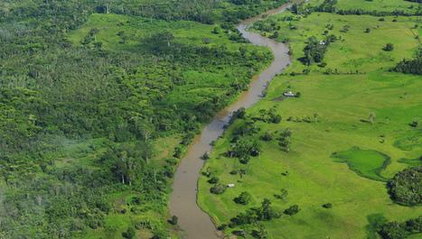 Cómo reducir la deforestación a la mitad | Educacion, ecologia y TIC | Scoop.it
