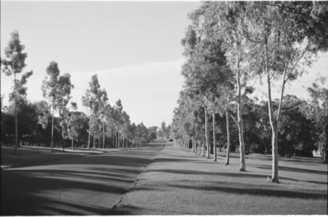 128493PD: Honour Avenue, Kings Park, Perth, 1947 :: slwa_b3348240_1 | Kings Park History | Scoop.it
