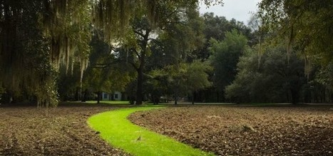 Christmas at the Most Welcoming of Dog Friendly Hotels – the Inn at Middleton Place - Zeldas Song | Cats | Scoop.it