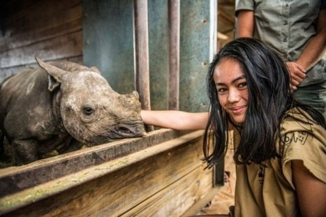 Vietnamese youth apologise for SA's decline in rhino | What's Happening to Africa's Rhino? | Scoop.it