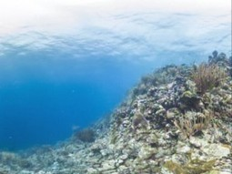 Reef Survey shows good news for Belize | Belize You Inspire Me | Scoop.it