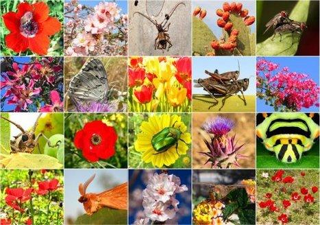 La biodiversité plonge à un niveau désormais dangereux pour la planète alertent les scientifiques | EntomoNews | Scoop.it