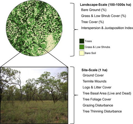The importance of fine-scale savanna heterogeneity for reptiles and small mammals | Remote Sensing - Vegetation Classification & Condition | Scoop.it