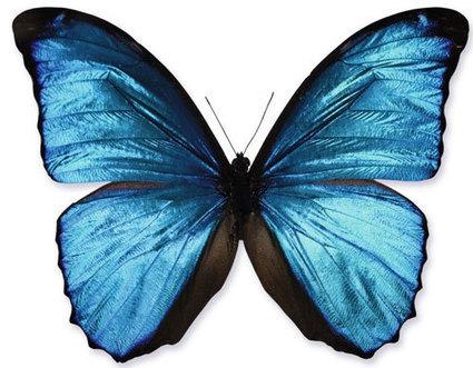 Des insectes à la photonique (Abonnés) | EntomoScience | Scoop.it