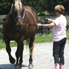 Equine Assisted Learning and Psychotherapy