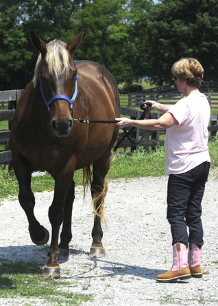 Mindfulness, The Brain and Horses   Equine Assisted Learning and Psychotherapy   Scoop.it