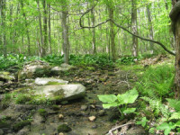Somers Land Trust: Invasive Plant Species Threatens Angle Fly Preserve - Patch.com | Plant Pests - Global Travellers | Scoop.it