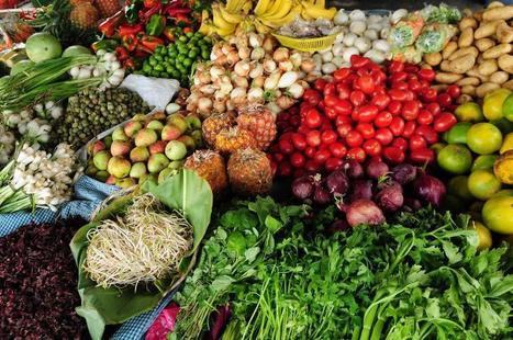 Banques de gènes: la FAO propose de nouvelles normes pour mieux préserver la diversité agricole | Chimie verte et agroécologie | Scoop.it