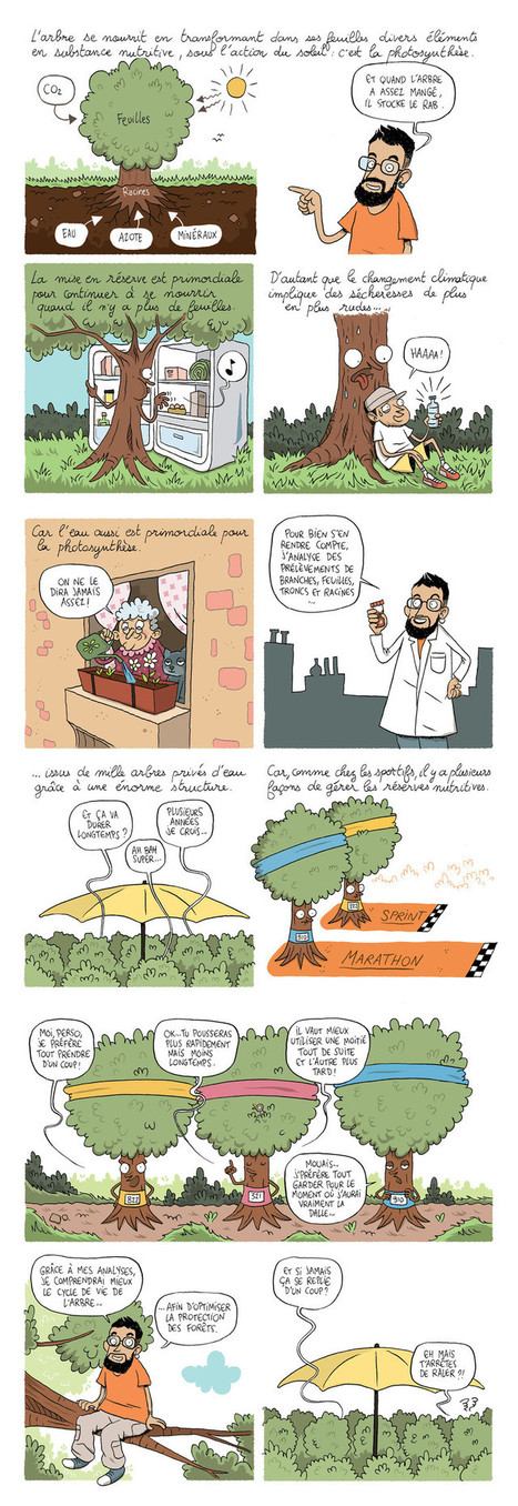 Ma thèse en BD : « La forêt où il ne pleut pas » | EntomoScience | Scoop.it