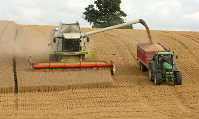 Farmers fail to feed UK after extreme weather hits wheat crop | The Barley Mow | Scoop.it