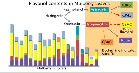 Varietal Differences in the Flavonol Content of Mulberry (Morus spp.) Leaves and Genetic Analysis of Quercetin 3-(6-Malonylglucoside) for Component Breeding - Journal of Agricultural and Food Chemi... | Plant Breeding and Genomics News | Scoop.it