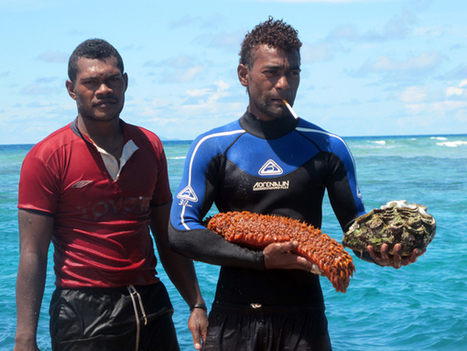 Dying for Fiji's Sea Cucumbers   Sustain Our Earth   Scoop.it
