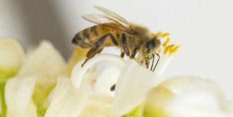 Les députés votent une interdiction des pesticides tueurs d'abeilles | Econo-logis | Scoop.it