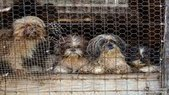 More than 80 animals rescued from alleged puppy mill - WHAS 11.com (subscription) | Wildlife in the United States and Canada | Scoop.it