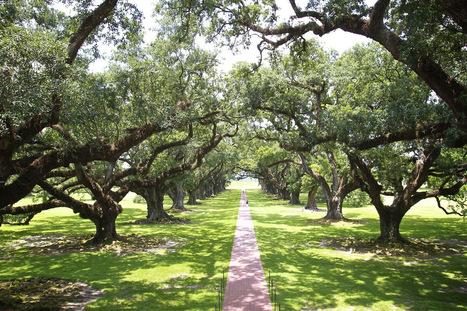 Amanda Nowak Photography - Oak Alley Plantation in Louisiana. So beautiful!... | Oak Alley Plantation: Things to see! | Scoop.it