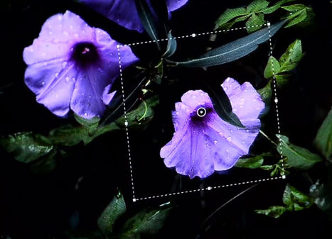 Photoshop update to let people fix photo blur - CNET | Inspirational ideas for photography | Scoop.it