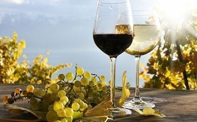 Στην υγειά της ποιότητας του ελληνικού κρασιού πίνουν οι Έλληνες οινοποιοί - news.gr | Γεωπονικά | Scoop.it