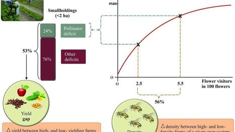 Mutually beneficial pollinator diversity and crop yield outcomes in small and large farms | Pollinator conservation and diversity | Scoop.it