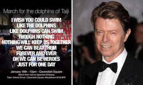 Animal rights activists to honour 'heroic' David Bowie at dolphin slaughter protests | Nature Animals humankind | Scoop.it