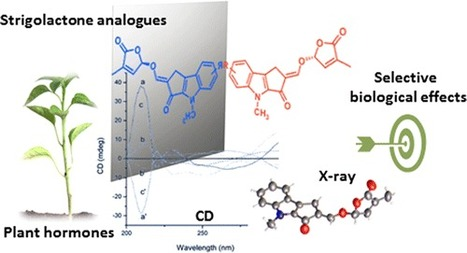 Stereochemical Assignment of Strigolactone Analogues Confirms Their Selective Biological Activity | Plant-Microbe Interaction | Scoop.it