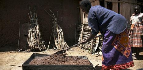 What ancient African fermentation techniques reveal about probiotics | Confidences Canopéennes | Scoop.it