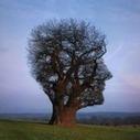 La forme de son arbre généalogique révèle le généalogiste | Yvon Généalogie | GenealoNet | Scoop.it