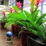 Energie uit kamerplanten laat de aarde draaien   Innovation   Scoop.it