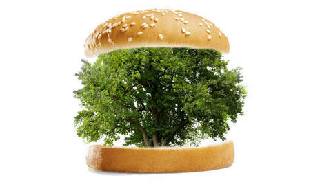 A tale of burgers and buns: Who is really reducing deforestation?   Inspiring Sustainable End-to-End Supply Chain   Scoop.it