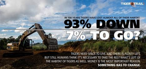 93% Down - 7% To Go   Tiger Conservation   Scoop.it
