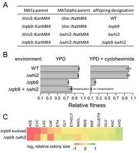 The Genomic Landscape of Compensatory Evolution   Conscious Evolution   Scoop.it