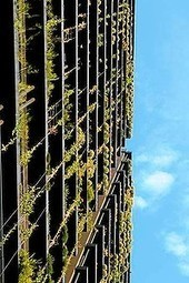 Greening of the upwardly mobile | smh.com.au | Year 7 ACARA Resources - Geography | Scoop.it