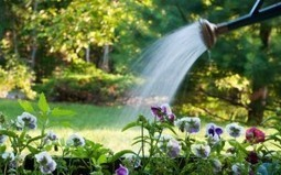 Planting on Rich Ground: Brooding Over Using Organic Soils | Home Improvement | Scoop.it