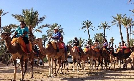 Balade en chameau a Marrakech - Morocco Trip Travel   Tourisme   Scoop.it