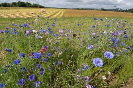 Une pétition pour protéger les sols - La Croix | Le Fil @gricole | Scoop.it