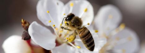 Loi biodiversité: le Conseil constitutionnel valide l'interdiction des pesticides néonicotinoïdes   Alter Tierra: Agroécologie & Agriculture   Scoop.it