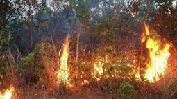 Fire and drought may push Amazonian forests beyond tipping point | Climate change challenges | Scoop.it