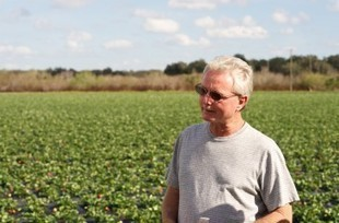 Strawberry Sue - A blog by the Florida Strawberry Growers Association | Annie Haven | Haven Brand | Scoop.it