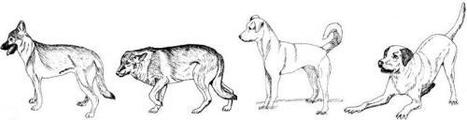 Domestic dogs display empathic response to distress in humans | Empathy and Animals | Scoop.it