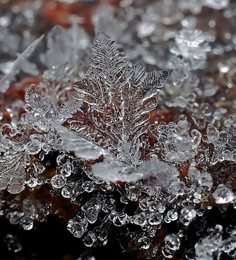 Macro Photographs of Snow Crystals & Snowflakes   Looks - Photography - Images & Visual Languages   Scoop.it