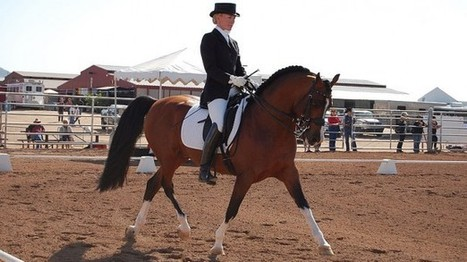 Romney horse rider: dressage can be done with a 'normal budget'   The Raw Story   Daily Crew   Scoop.it