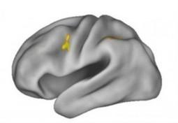 Study Reveals Workings of Working Memory | Neuroscience News Research Articles | Neuroscience Social Network | BrainLovers | Scoop.it